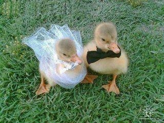 Congratulations Donald and Daisy